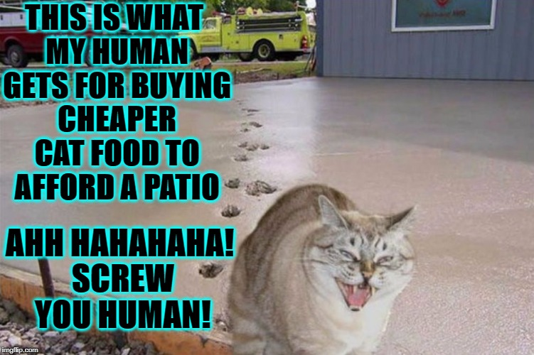 THIS IS WHAT MY HUMAN GETS FOR BUYING CHEAPER CAT FOOD TO AFFORD A PATIO AHH HAHAHAHA! SCREW YOU HUMAN! | image tagged in little turd | made w/ Imgflip meme maker