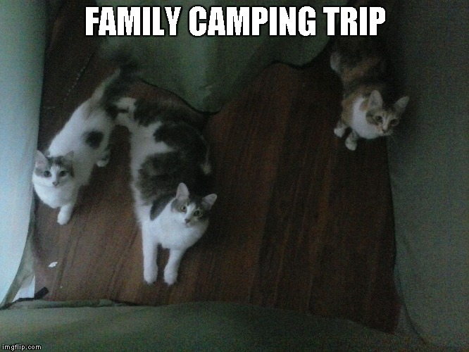Queen Little Bit, Medusa and Milia camping | FAMILY CAMPING TRIP | image tagged in cats,funny,dwarf cat,tent | made w/ Imgflip meme maker