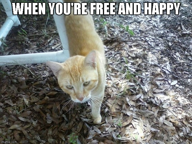 Shakespeare is happy | WHEN YOU'RE FREE AND HAPPY | image tagged in cats,cute,kitty | made w/ Imgflip meme maker