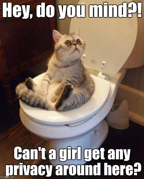 25o4y2 image tagged in cat sitting on toilet imgflip