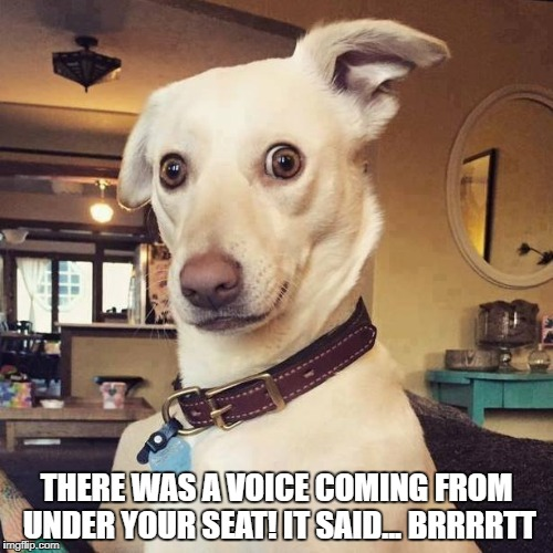 THERE WAS A VOICE COMING FROM UNDER YOUR SEAT! IT SAID... BRRRRTT | image tagged in what | made w/ Imgflip meme maker