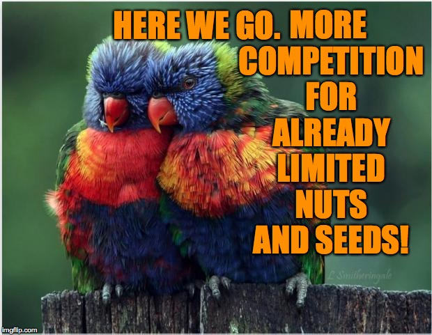 HERE WE GO. MORE COMPETITION FOR ALREADY LIMITED NUTS AND SEEDS! | made w/ Imgflip meme maker