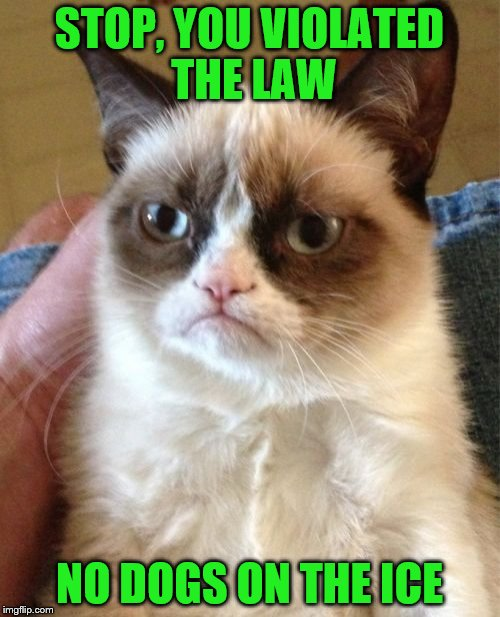 Grumpy Cat Meme | STOP, YOU VIOLATED THE LAW NO DOGS ON THE ICE | image tagged in memes,grumpy cat | made w/ Imgflip meme maker