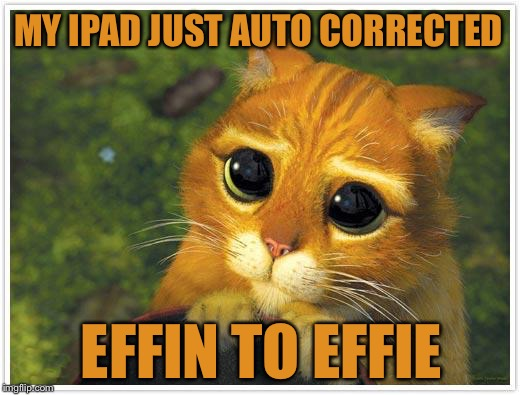 Shrek Cat | MY IPAD JUST AUTO CORRECTED EFFIN TO EFFIE | image tagged in memes,shrek cat | made w/ Imgflip meme maker