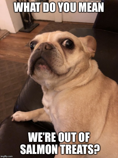 Frenchie Fear Face |  WHAT DO YOU MEAN; WE'RE OUT OF SALMON TREATS? | image tagged in frenchiefear,dog,french bulldog,frenchie,scared dog | made w/ Imgflip meme maker