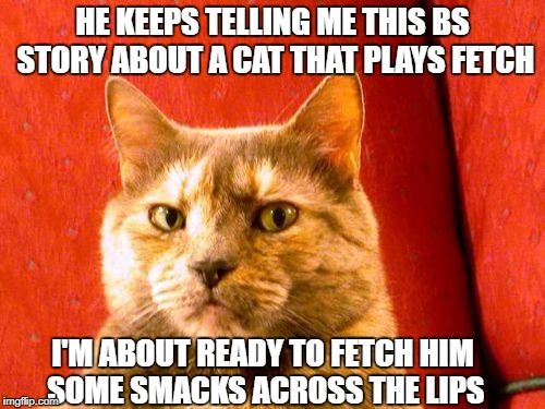 Suspicious Cat Meme | HE KEEPS TELLING ME THIS BS STORY ABOUT A CAT THAT PLAYS FETCH I'M ABOUT READY TO FETCH HIM SOME SMACKS ACROSS THE LIPS | image tagged in memes,suspicious cat | made w/ Imgflip meme maker