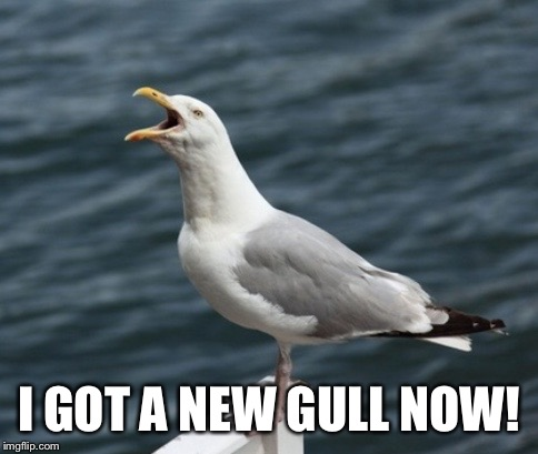 GULL ! | I GOT A NEW GULL NOW! | image tagged in gull,seagull,streetheart,song | made w/ Imgflip meme maker