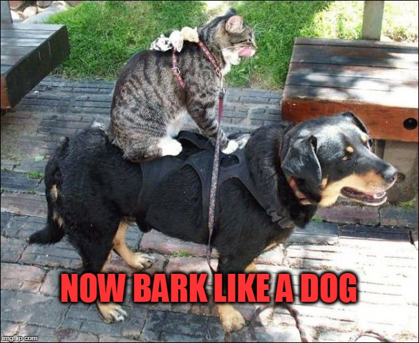 NOW BARK LIKE A DOG | image tagged in bark like a dog,cats,dogs | made w/ Imgflip meme maker