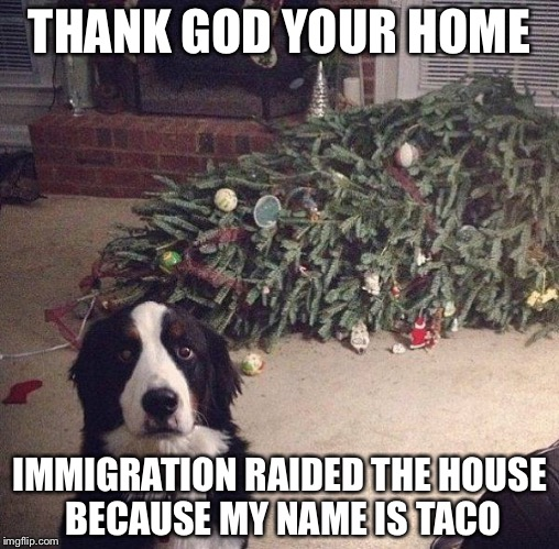 Dog Christmas Tree | THANK GOD YOUR HOME IMMIGRATION RAIDED THE HOUSE BECAUSE MY NAME IS TACO | image tagged in dog christmas tree | made w/ Imgflip meme maker