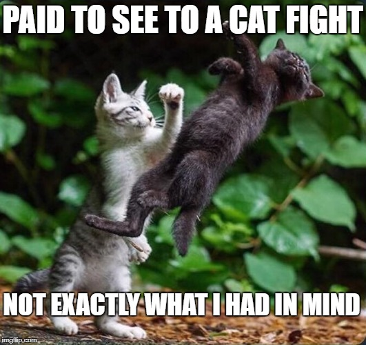 CAT FIGHT | PAID TO SEE TO A CAT FIGHT NOT EXACTLY WHAT I HAD IN MIND | image tagged in funny cats,sexy cat,lol so funny,crazy cat | made w/ Imgflip meme maker