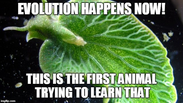 EVOLUTION HAPPENS NOW! THIS IS THE FIRST ANIMAL TRYING TO LEARN THAT | made w/ Imgflip meme maker