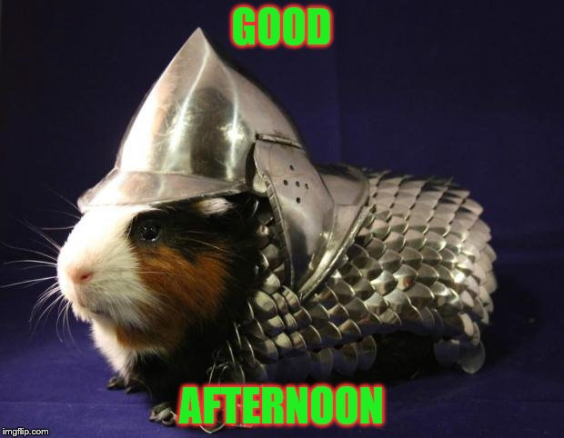 guinea pig memes | GOOD AFTERNOON | image tagged in guinea pig | made w/ Imgflip meme maker