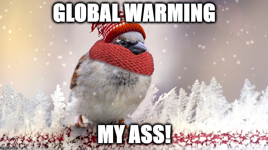 GLOBAL WARMING MY ASS! | image tagged in birg | made w/ Imgflip meme maker