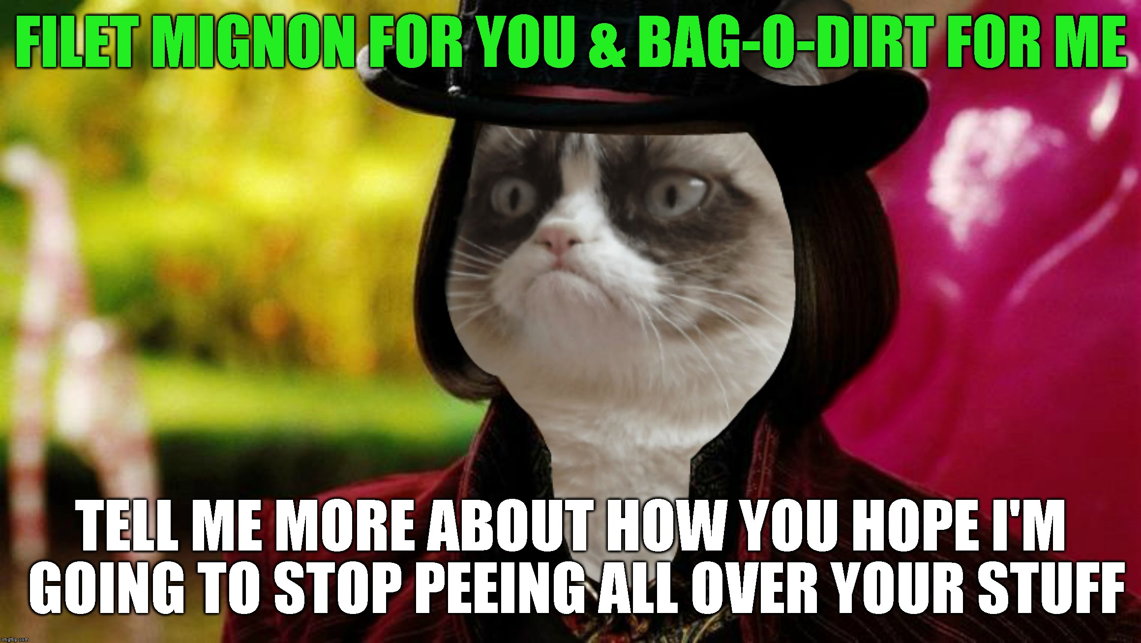 Evil-The-Cat | FILET MIGNON FOR YOU & BAG-O-DIRT FOR ME TELL ME MORE ABOUT HOW YOU HOPE I'M GOING TO STOP PEEING ALL OVER YOUR STUFF | image tagged in wonka grumpy cat,grumpy cat,creepy condescending wonka,willy wonka,jealousy,revenge | made w/ Imgflip meme maker