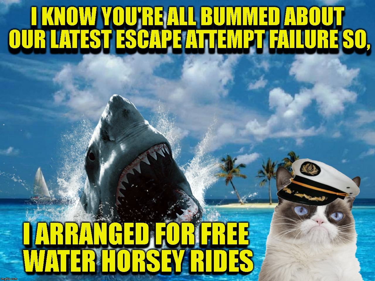 Not So Grumpy Cat Is Working On A Little Team Bonding (Gilligan's Island Week) | I KNOW YOU'RE ALL BUMMED ABOUT OUR LATEST ESCAPE ATTEMPT FAILURE SO, I ARRANGED FOR FREE WATER HORSEY RIDES I ARRANGED FOR FREE WATER HORSEY | image tagged in gilligans island week,grumpy cat,fail,failure,gilligan's island,gilligans island | made w/ Imgflip meme maker
