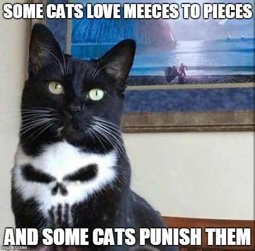 Punisher Cat | SOME CATS LOVE MEECES TO PIECES AND SOME CATS PUNISH THEM | image tagged in memes,punisher,cats,cat,comics,mice | made w/ Imgflip meme maker