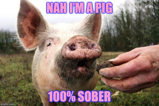 TrufflePig | NAH I'M A PIG 100% SOBER | image tagged in trufflepig | made w/ Imgflip meme maker