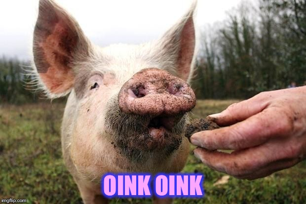TrufflePig | OINK OINK | image tagged in trufflepig | made w/ Imgflip meme maker