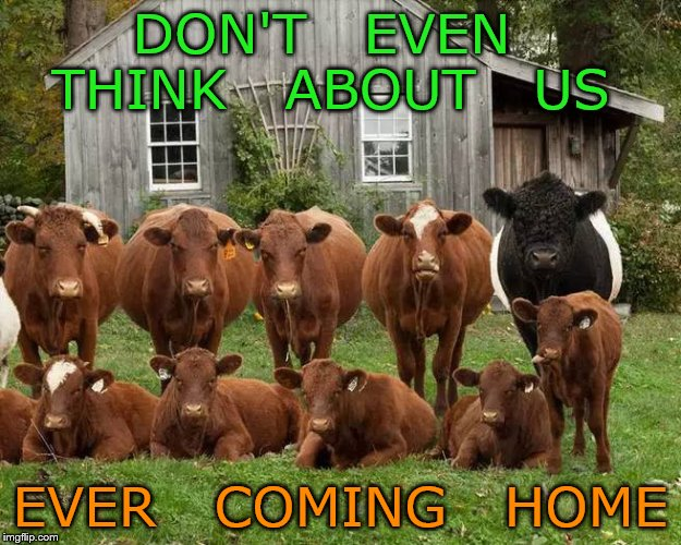 until the cows come home | DON'T   EVEN   THINK   ABOUT   US EVER   COMING   HOME | image tagged in funny | made w/ Imgflip meme maker