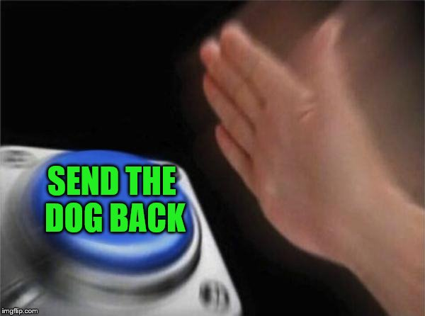Blank Nut Button Meme | SEND THE DOG BACK | image tagged in memes,blank nut button | made w/ Imgflip meme maker