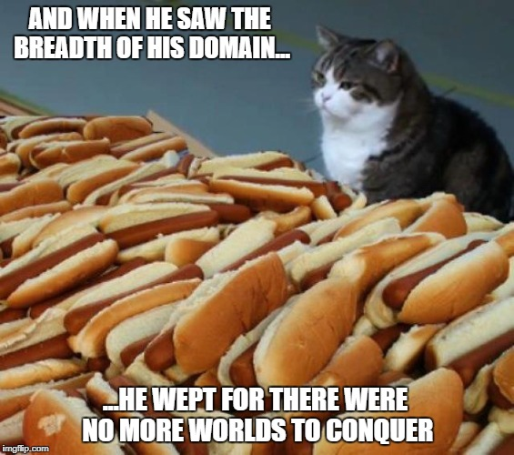 AND WHEN HE SAW THE BREADTH OF HIS DOMAIN... ...HE WEPT FOR THERE WERE NO MORE WORLDS TO CONQUER | image tagged in cat | made w/ Imgflip meme maker