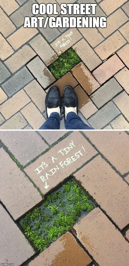 COOL STREET ART/GARDENING | image tagged in street art,gardening | made w/ Imgflip meme maker