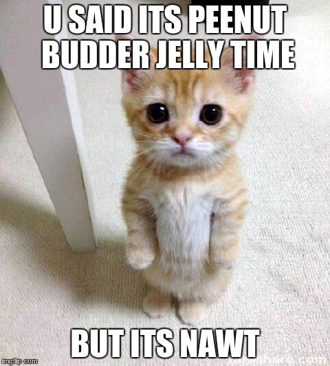 Cute Cat Meme | U SAID ITS PEENUT BUDDER JELLY TIME BUT ITS NAWT | image tagged in memes,cute cat | made w/ Imgflip meme maker