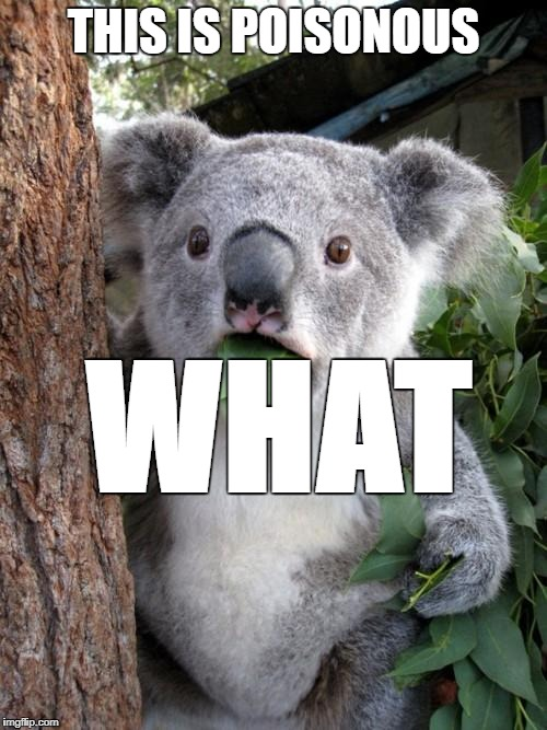 Surprised Koala Meme | THIS IS POISONOUS WHAT | image tagged in memes,surprised koala | made w/ Imgflip meme maker