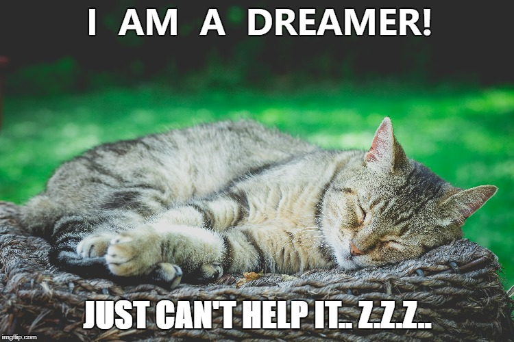 I AM A DREAMER! | I  AM  A  DREAMER! JUST CAN'T HELP IT.. Z.Z.Z.. | image tagged in inspirational quote,cats,funny cats,inspirational | made w/ Imgflip meme maker