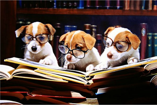 Image result for dogs reading