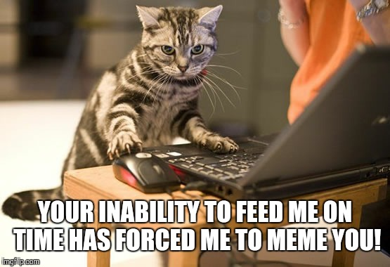 cat computer | YOUR INABILITY TO FEED ME ON TIME HAS FORCED ME TO MEME YOU! | image tagged in cat computer | made w/ Imgflip meme maker