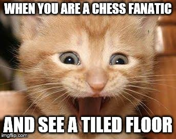 Excited Cat | WHEN YOU ARE A CHESS FANATIC AND SEE A TILED FLOOR | image tagged in memes,excited cat | made w/ Imgflip meme maker