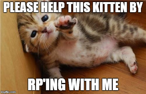 Help Me Kitten | PLEASE HELP THIS KITTEN BY RP'ING WITH ME | image tagged in help me kitten | made w/ Imgflip meme maker