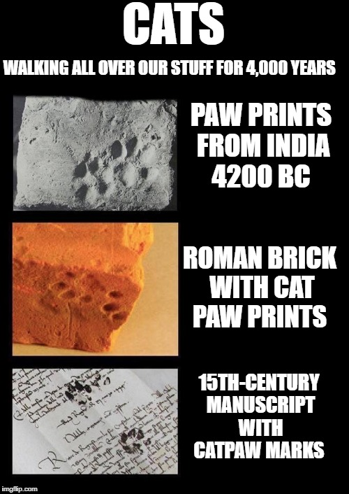 Cats walking all over our stuff for 4,000 years  | CATS WALKING ALL OVER OUR STUFF FOR 4,000 YEARS PAW PRINTS FROM INDIA 4200 BC ROMAN BRICK WITH CAT PAW PRINTS 15TH-CENTURY MANUSCRIPT WITH C | image tagged in cats | made w/ Imgflip meme maker