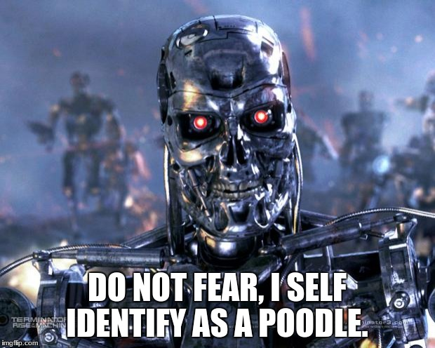 Terminator Robot T-800 | DO NOT FEAR, I SELF IDENTIFY AS A POODLE. | image tagged in terminator robot t-800 | made w/ Imgflip meme maker