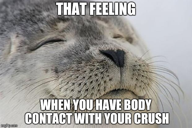 Satisfied Seal Meme | THAT FEELING WHEN YOU HAVE BODY CONTACT WITH YOUR CRUSH | image tagged in memes,satisfied seal | made w/ Imgflip meme maker