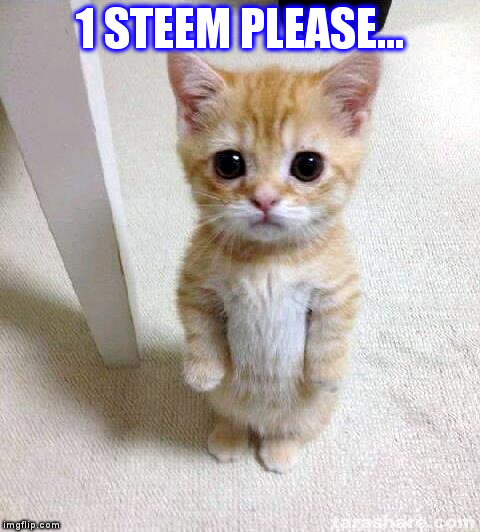 Cute Cat Meme | 1 STEEM PLEASE... | image tagged in memes,cute cat | made w/ Imgflip meme maker
