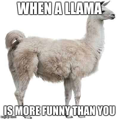 funny | WHEN A LLAMA IS MORE FUNNY THAN YOU | image tagged in llamas | made w/ Imgflip meme maker