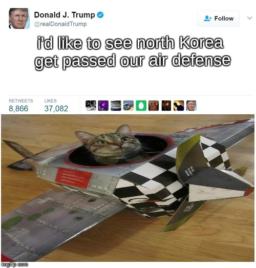 Cat Memes For Donald Trump