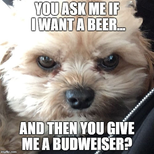 Budweiser? | YOU ASK ME IF I WANT A BEER... AND THEN YOU GIVE ME A BUDWEISER? | image tagged in dogs,beer,angry,craft beer,dog,scowl | made w/ Imgflip meme maker