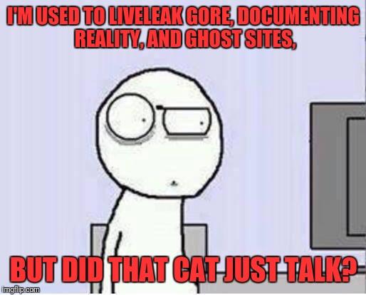 Cat Electrocuted Liveleak