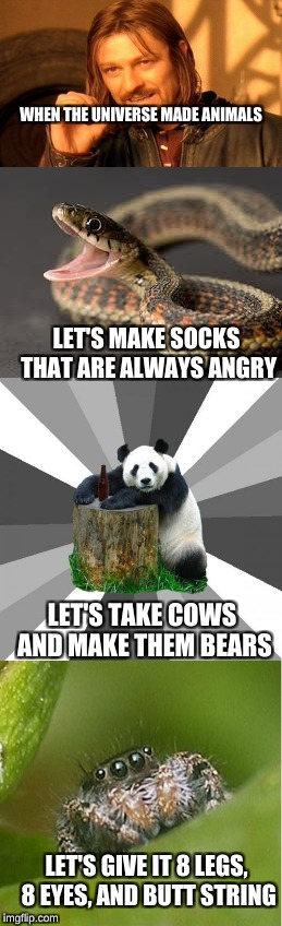 when the universe decided animals........ | WHEN THE UNIVERSE MADE ANIMALS LET'S MAKE SOCKS THAT ARE ALWAYS ANGRY LET'S GIVE IT 8 LEGS, 8 EYES, AND BUTT STRING LET'S TAKE COWS AND MAKE | image tagged in one does not simply | made w/ Imgflip meme maker