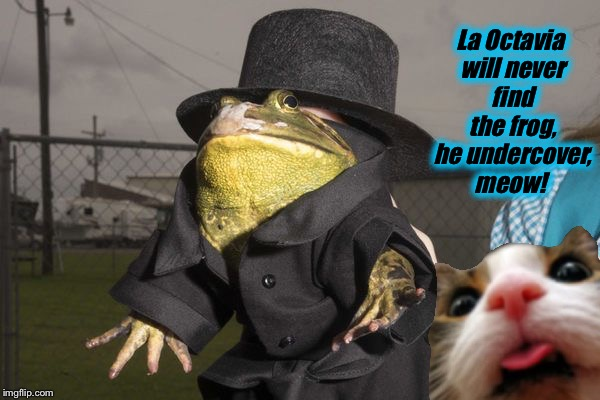 La Octavia will never find the frog, he undercover, meow! | made w/ Imgflip meme maker