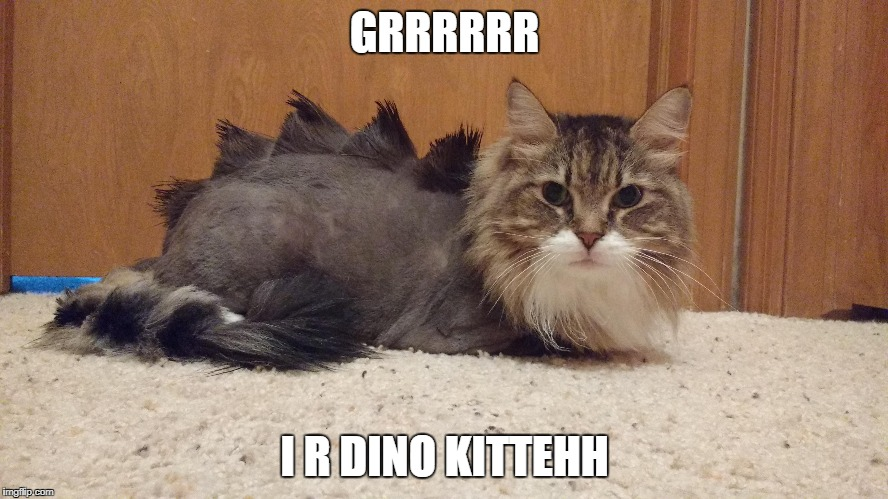 dino kitten | GRRRRRR I R DINO KITTEHH | image tagged in cat,funny cats | made w/ Imgflip meme maker