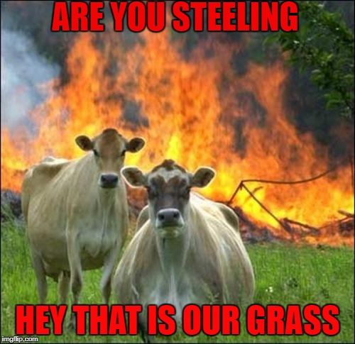 Evil Cows Meme | ARE YOU STEELING HEY THAT IS OUR GRASS | image tagged in memes,evil cows | made w/ Imgflip meme maker