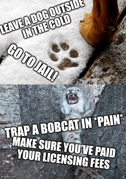 End the Hypocrisy  | LEAVE A DOG OUTSIDE IN THE COLD TRAP A BOBCAT IN *PAIN* GO TO JAIL! MAKE SURE YOU'VE PAID YOUR LICENSING FEES | image tagged in animal rights,hunting,trapping,dog,bobcat,pain | made w/ Imgflip meme maker