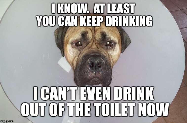 I KNOW.  AT LEAST YOU CAN KEEP DRINKING I CAN'T EVEN DRINK OUT OF THE TOILET NOW | made w/ Imgflip meme maker