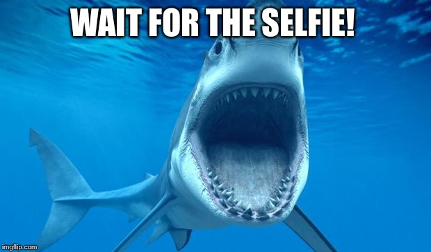 shark open mouth | WAIT FOR THE SELFIE! | image tagged in shark open mouth | made w/ Imgflip meme maker