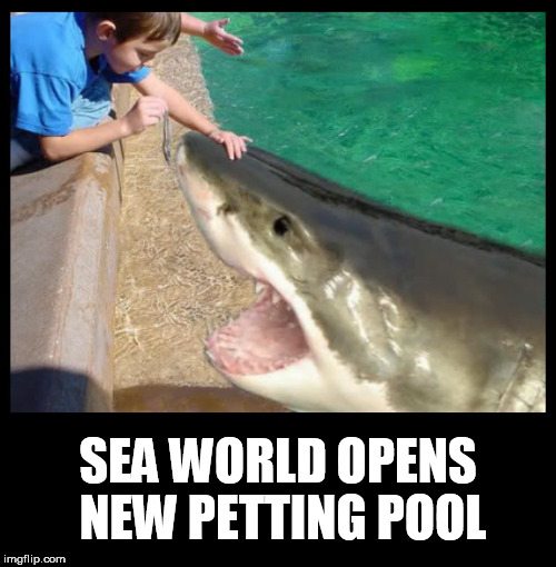 shark | SEA WORLD OPENS NEW PETTING POOL | image tagged in shark,seaworld,sharks,petting,pool,aquarium | made w/ Imgflip meme maker