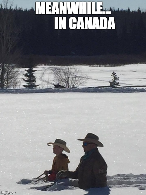 MEANWHILE...         IN CANADA | image tagged in horses | made w/ Imgflip meme maker